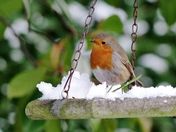 Birds in the snow 28/02/2018   2