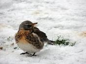 Winter visitor  Photo Challenge