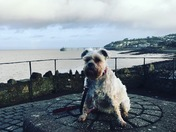 Bella having a saterday morning walk in clevedon
