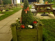 "A festive little fir tree at ""The Grove"" Exmouth"