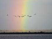 flight of colour