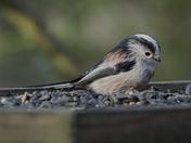 Garden Birds at Sculthorpe Moor Nature Reserve