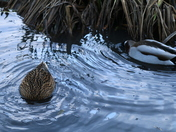 Water - ripples
