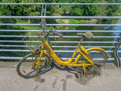 Ofo Bike Pulled from the River Wensum