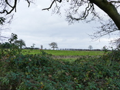 view across the field at south creake