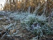 A frosty walk at Burlingham.