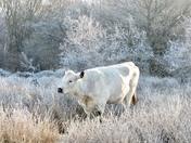 A frosty stroll