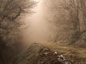 Misty calm