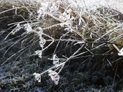 A hard winter's frost displaying the beauty of our countryside