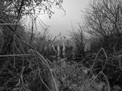 Through frozen reeds