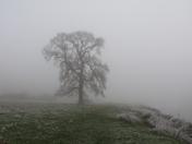 Misty scene.