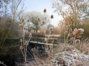 Frosty morning at Watfield 31/01/2019