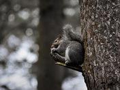 Woodland Animals in Thetford Forest