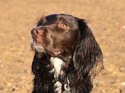 Pets of Norfolk : Ruby