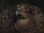 Birds looking fit