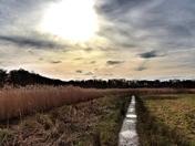 Carlton Marshes Nature Reserve