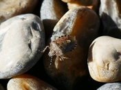 PROJECT 52, MACRO. BUG ON THE PEBBLES