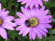 PROJECT 52, MACRO. BUSY BEE