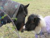 Pony love !