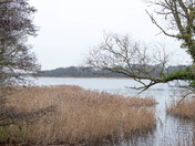 Little Ormesby Broad