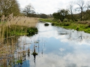 RIVER REFLECTIONS AT PENSTHORPE NATURAL PARK