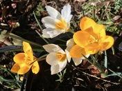 Spring in Aldborough Hatch