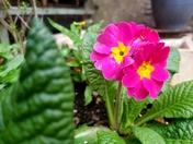 Springing into flower