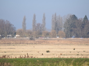 Oulton Marshes