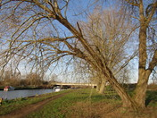 Beccles River Waveney
