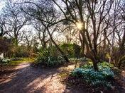Snowdrops at Blakenham Woodland Gardens