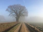 A beautiful foggy morning