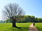 Norfolk Path - Sheringham Park