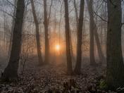 Sunrise through the trees (Bucklesham)
