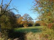 Glimpse of an Oak
