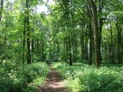Project52 Week8 Norfolk Paths