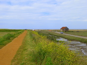 Project 52 - Norfolk Paths