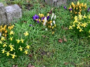 Spring burst out in Aldborough Hatch