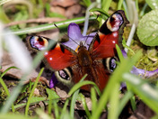 As spring approaches the flowers bloom and the bees and butterflies arrive