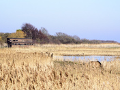 A Day At Minsmere
