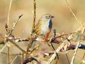 Happy little warbler