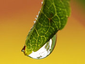 CLOSE UP OF NATURE AND EVERYDAY ITEMS