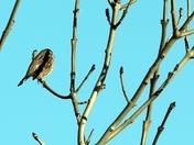 A birding bonus.