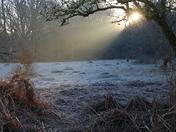 Frosty Light