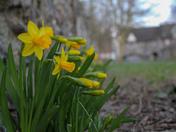 Spring flowers near Pulls Ferry