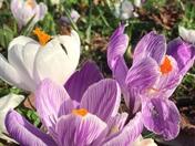 Springtime in Chapelfield Gardens