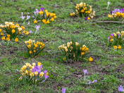 Spring has sprung in the garden