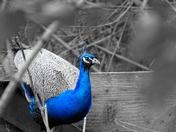 Photo Challenge: Blue