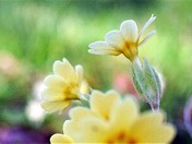 Full flower Spring.