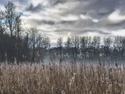 Reed bed and moody sky at Sculthorpe