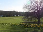 Daffodils & Hailstones at UEA